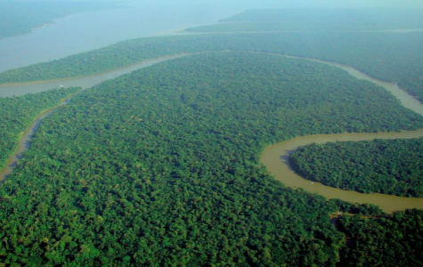 Aerial view of the Amazon Rainforest before it was engulfed in flames.