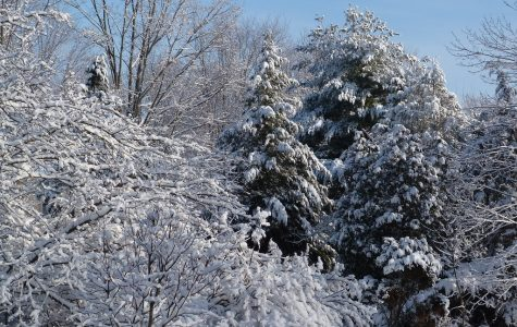 Connecticut Activities for Winter Fun Winter Time