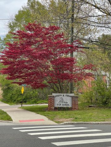 Richly colored tree in the entrance of Foran High School. Photo courtesy: Maria Garbin, May 2, 2021.