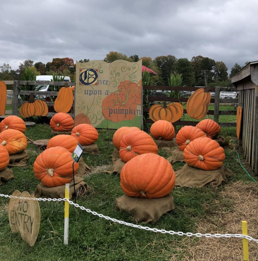 Jones Pumpkins: The largest pumpkins on display next to the pig pen.